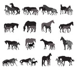 Groups of isolated horses and foals silhouettes - 166952632