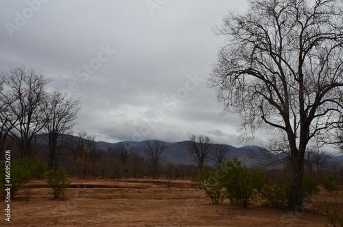 Foto op Aluminium Bleke violet The African landscape. Zimbabwe.