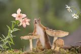squirrel behind mushrooms with daisies