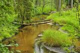 Rezerwat Szum