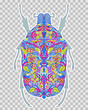 abstract colorful beetle