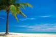 Quadro beach and tropical sea