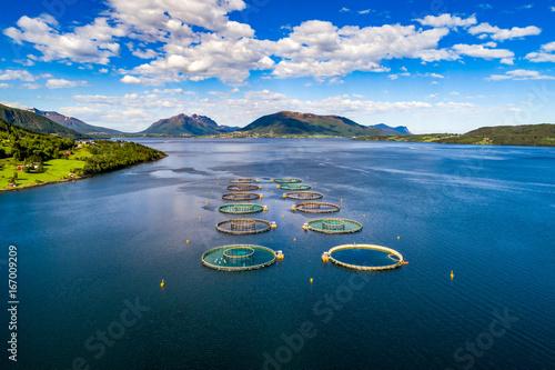 Spoed canvasdoek 2cm dik Wanddecoratie met eigen foto Farm salmon fishing