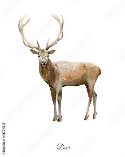 recznie-malowane-akwarela-plakat-z-jelenia