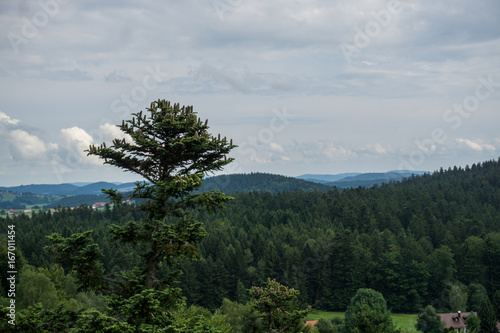 Foto op Aluminium Bleke violet Aussicht auf den Bayrischen Wald vom Aussichtspunkt Waldgipfelpfad
