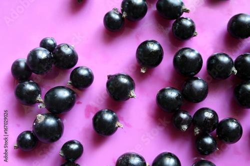 black currant - 167029026