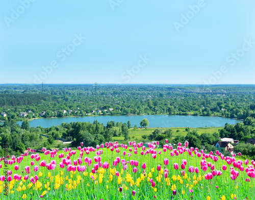 lilac tulips on the flower-bed on the background of village lake Poster
