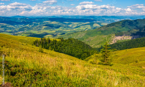 grassy meadow with forest on steep slope