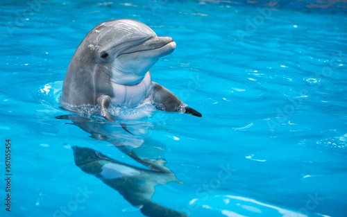 baby-dolphin