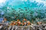 Plitvice Lakes National Park, Dalmatia, Croatia - 167071299