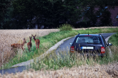 Fotobehang Hert Deer next to a country road