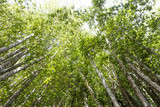 Bamboo forest from tropical garden, outdoor day light