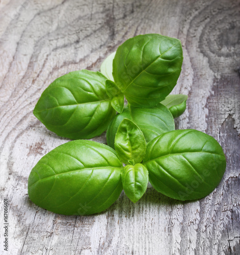 Basil leaves spice closeup Poster
