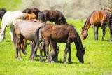 Koń na pastwisku na zielonym trawniku