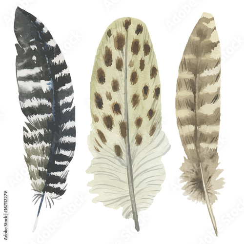 Vector bird feather from wing isolated. Aquarelle feather for background, texture, wrapper pattern, frame or border. - 167112279