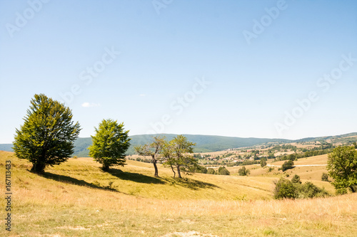 Romanian mountain landscape with trees