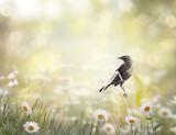 Ptak brązowy perching na łące