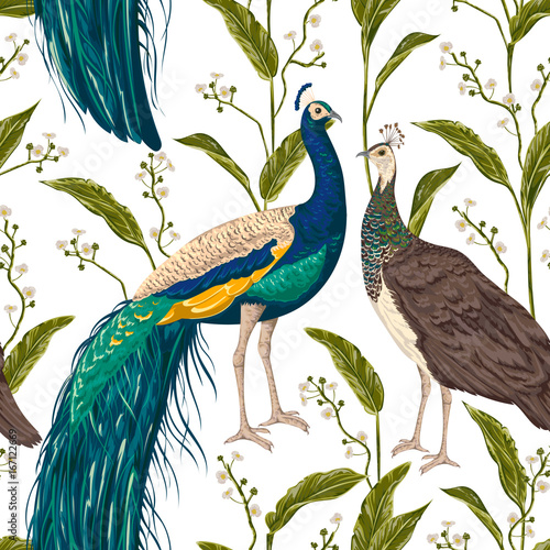 Seamless pattern with male and female peacock, flowers and leaves. Vintage hand drawn vector illustration in watercolor style - 167122669