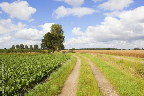Deurstickers Blauwe hemel curving farm track
