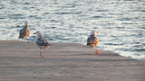 Gulls on the pier - 167141435