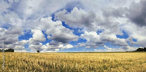 Wolkenhimmel über einem Gerstenfeld