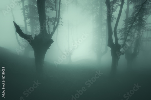 Foto op Aluminium Betoverde Bos scary forest with mood