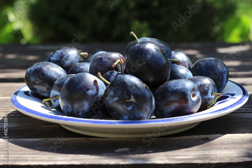 Freshly picked organic ripe delicious blue plums . Blurred background