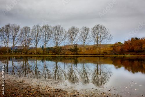 Foto op Aluminium Bleke violet Bare treereflections