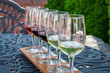 Wine tasting from sample glasses on a summer day