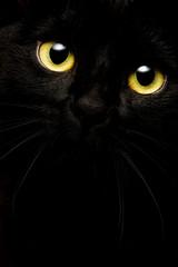 Schwarze Katze auf schwarzem Grund