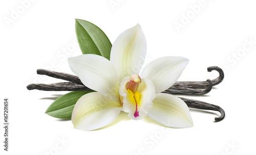 Vanilla flower, pods, leaves isolated on white