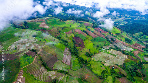 top view rice fields on terraced , rice plantations , Chiangmai province , North of thailand