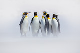 Penguins in the snow. Group of King penguins coming to sea beach with wave a blue sky. Birds on the beach. Funny penguins image. Wildlife nature scene from Antarctica. Penguins with ocean. - 167228814