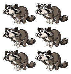 Raccoon with different expressions © brgfx