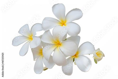 white flower or white flower background