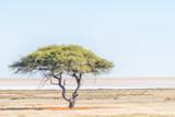 Lonely krajobraz drzewa z Etosha Pan z tyłu