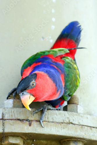 Red Black Colorful Parrot Parakeet