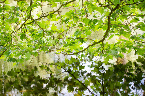 Nature scene. Spring tree reflected in water.