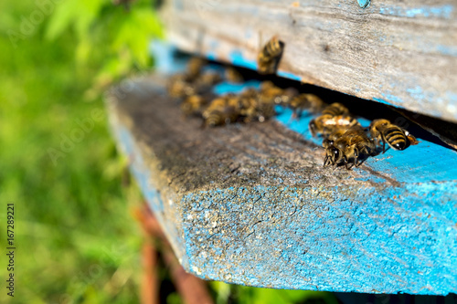 Foto op Aluminium Bee Life of bees. Worker bees. The bees bring honey.