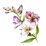 Composition with alstroemeria. Hand draw watercolor illustration. - 167289853