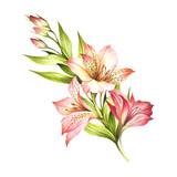 Composition with alstroemeria. Hand draw watercolor illustration. - 167289897