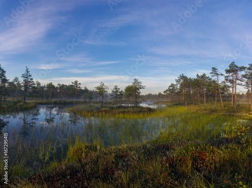 sunrise in the swamp. Leningrad oblast. Russia