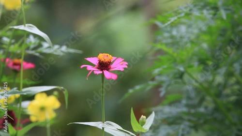 Fridge magnet flower
