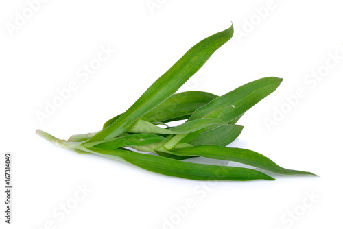 Foto op Canvas Peking fresh Beijing grass herb on white background