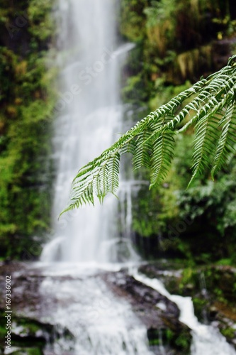 Erskine Fern Waterfall - 167336002
