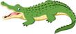 Cartoon crocodile isolated on white background - 167336821