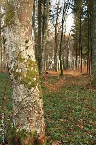 Foto op Canvas Weg in bos Biosphärengebiet Schwabenland