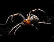 Quadro The spider sits on a web on the hunt
