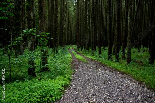 Foto op Canvas Weg in bos Wald_1