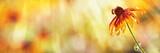 Coneflower, Bee, Summer Background - 167381643